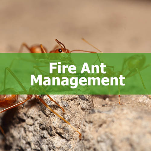 Fire Ant Management