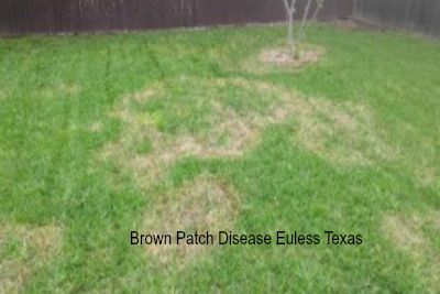 Does Your lawn have Brown Patch