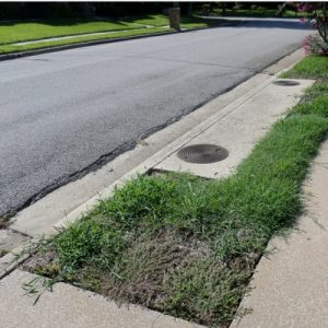 Lawn Pre-emergent Weed Control