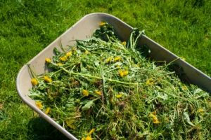 Using Pre-Emergent For Weed Prevention