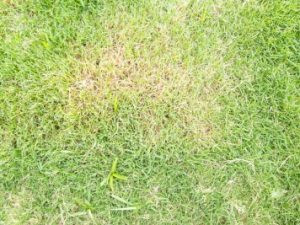 What to Do About Dry Hot Spots in Lawn