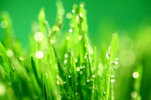 Does Your Turfgrass Get Enough Light