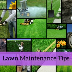 Lawn Maintenance Quick Tips
