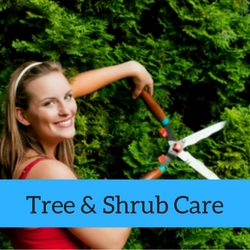 Tree Shrub Care Quick Tips